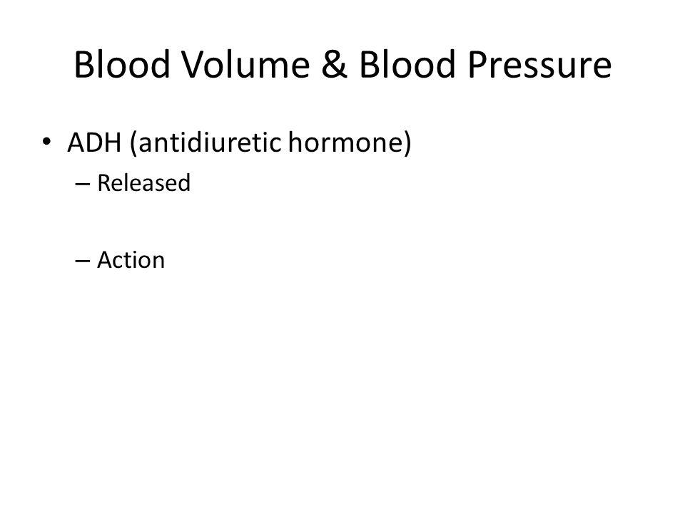 Blood Volume & Blood Pressure