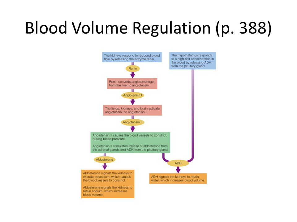 Blood Volume Regulation (p. 388)