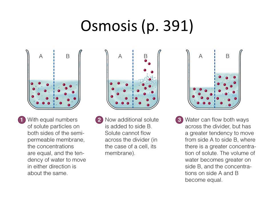 Osmosis (p. 391)