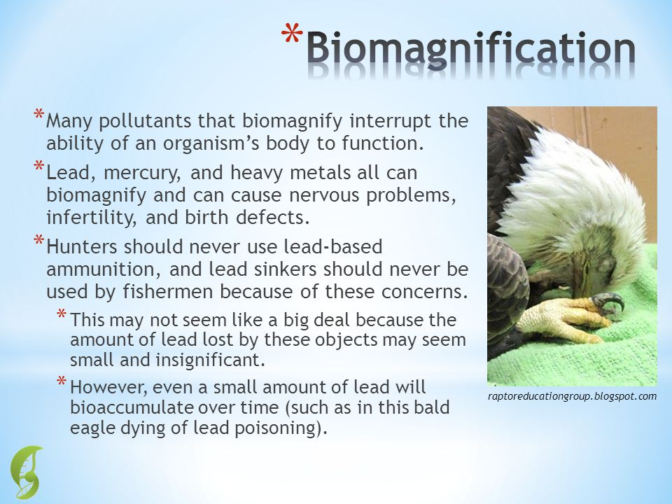 Biomagnification Many pollutants that biomagnify interrupt the ability of an organism's body to function.