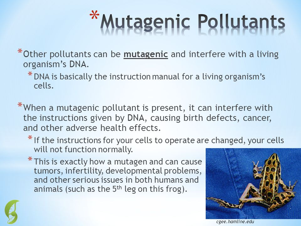 Mutagenic Pollutants Other pollutants can be mutagenic and interfere with a living organism's DNA.
