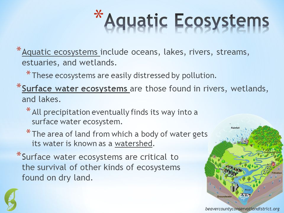 Aquatic Ecosystems Aquatic ecosystems include oceans, lakes, rivers, streams, estuaries, and wetlands.