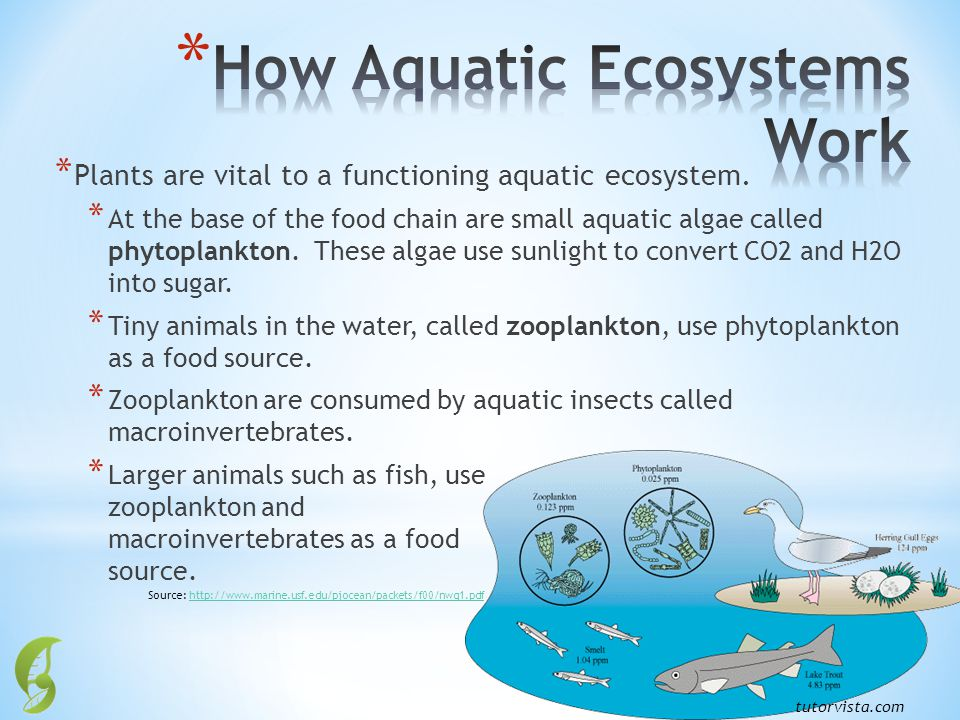How Aquatic Ecosystems Work