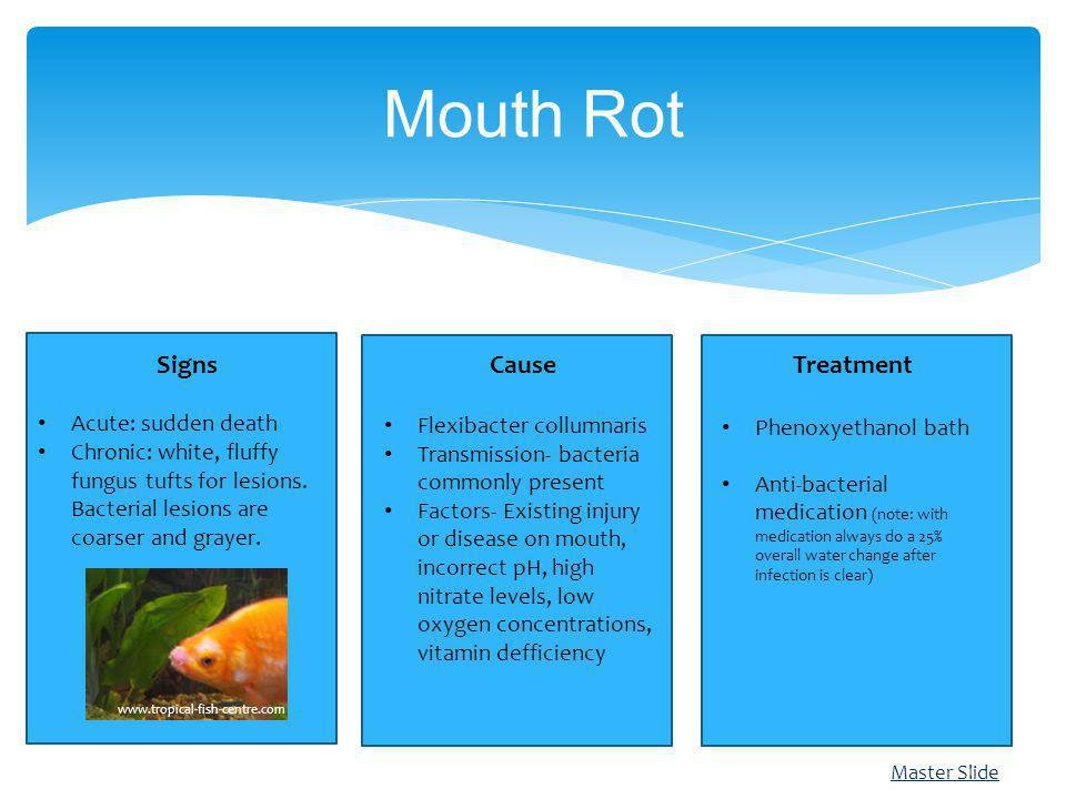 Mouth Rot Signs Cause Treatment Acute: sudden death