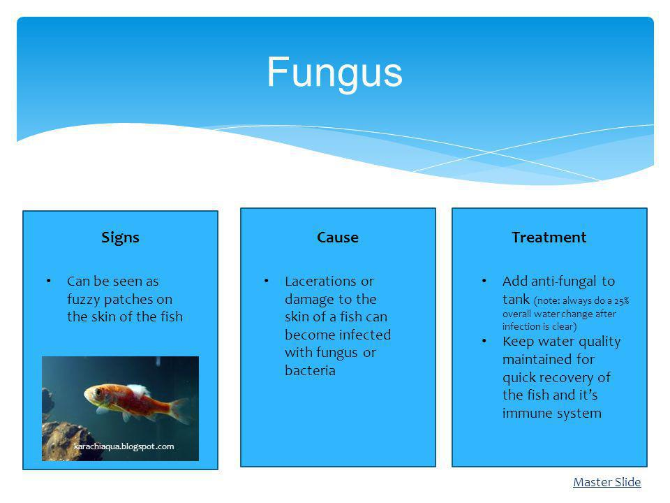 Fungus Cause Signs Treatment