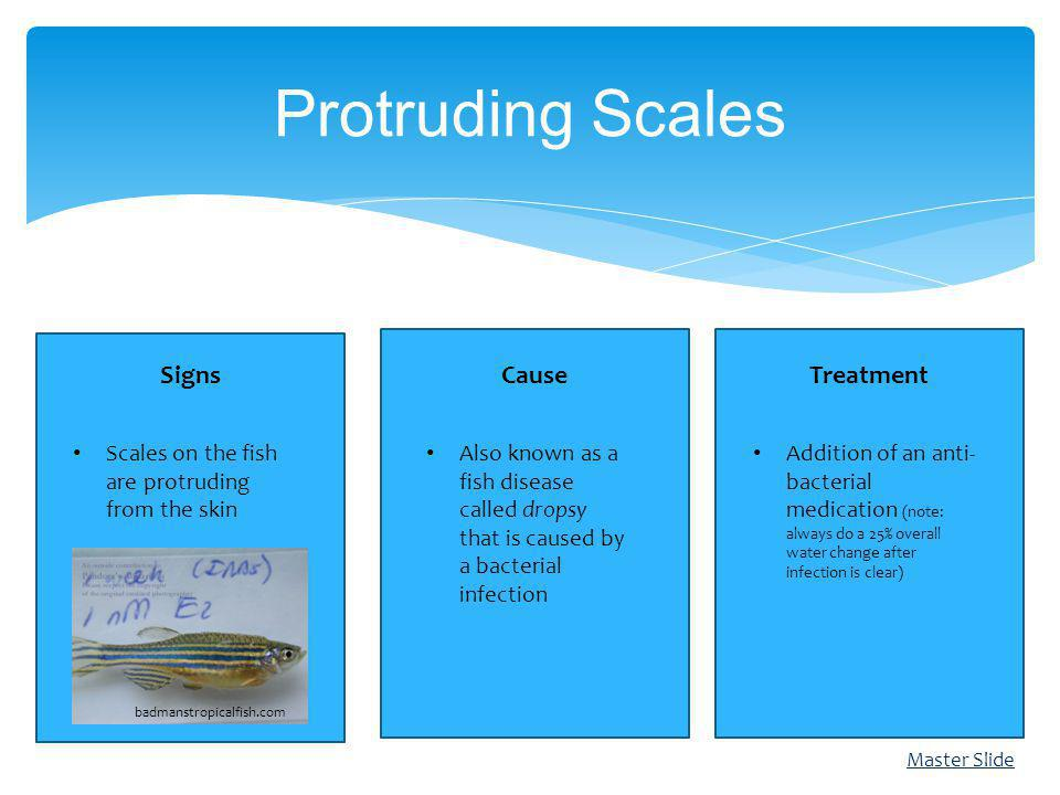 Protruding Scales Cause Signs Treatment