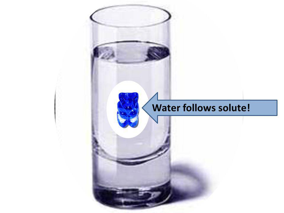 Water follows solute!