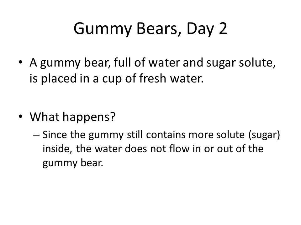 Gummy Bears, Day 2 A gummy bear, full of water and sugar solute, is placed in a cup of fresh water.