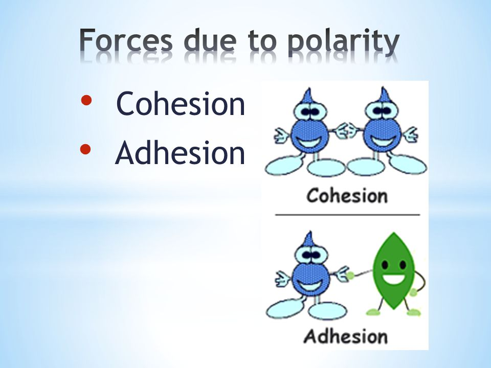 Forces due to polarity Cohesion Adhesion