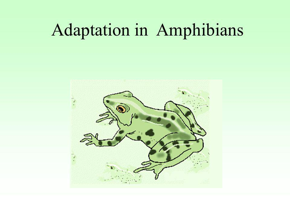 Adaptation in Amphibians