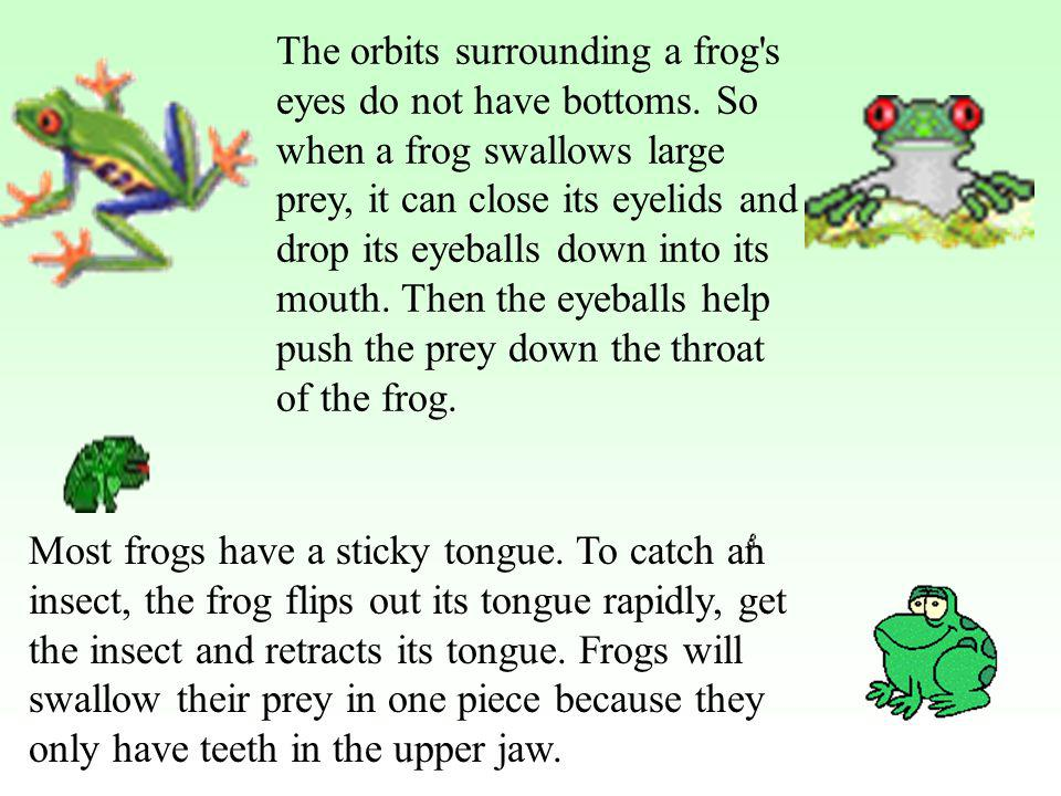 The orbits surrounding a frog s eyes do not have bottoms