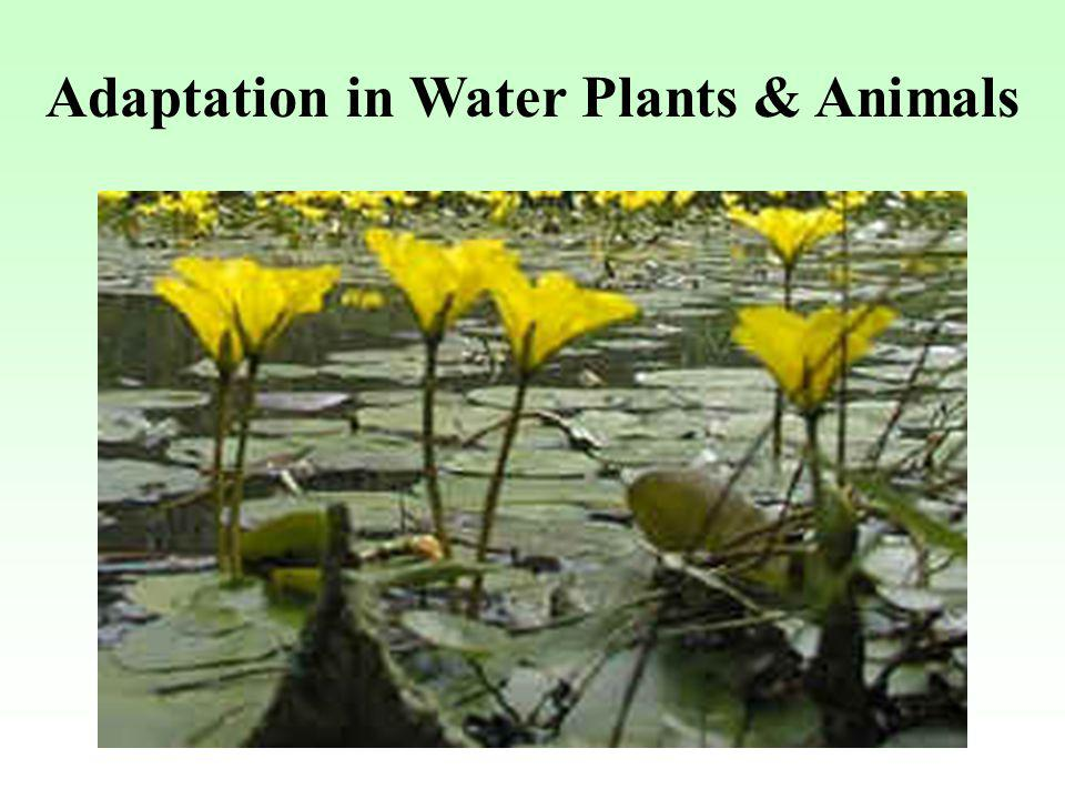 Adaptation in Water Plants & Animals