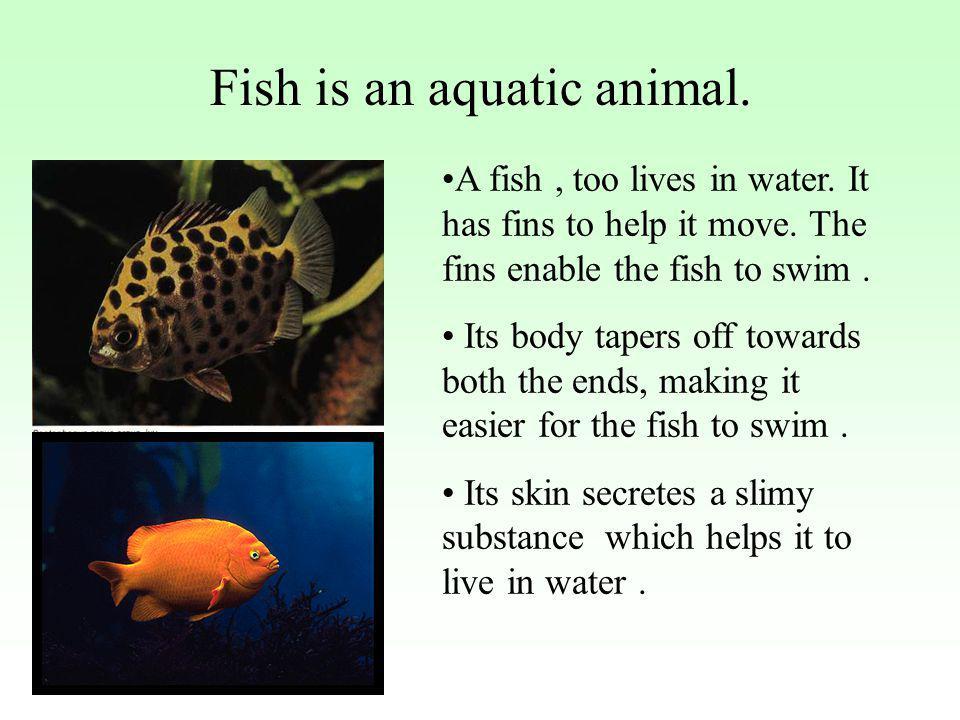 Fish is an aquatic animal.