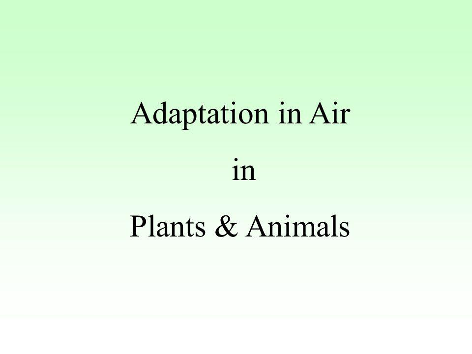Adaptation in Air in Plants & Animals