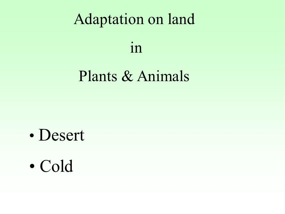 Adaptation on land in Plants & Animals Desert Cold