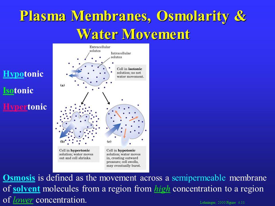 Plasma Membranes, Osmolarity & Water Movement