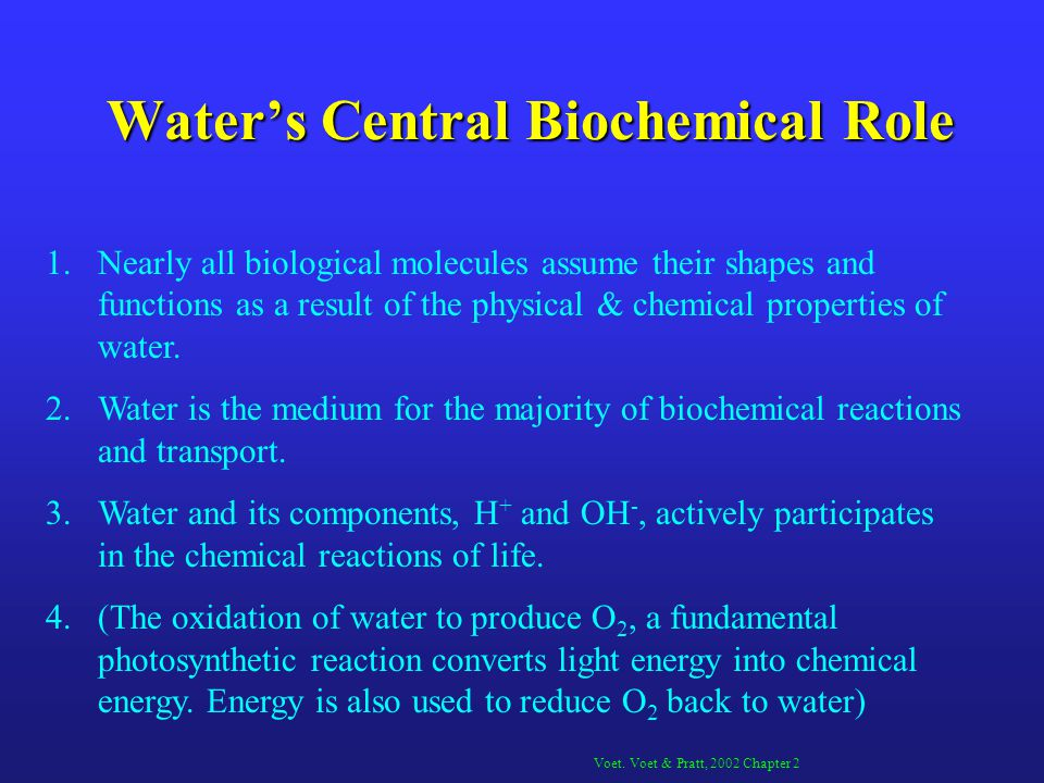 Water's Central Biochemical Role