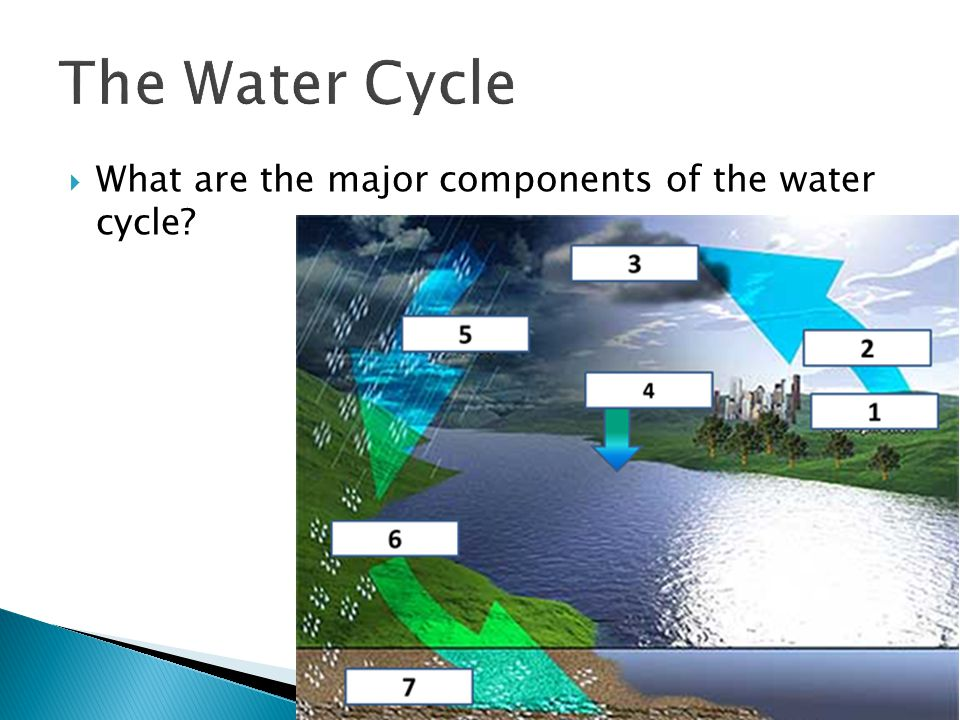 The Water Cycle What are the major components of the water cycle