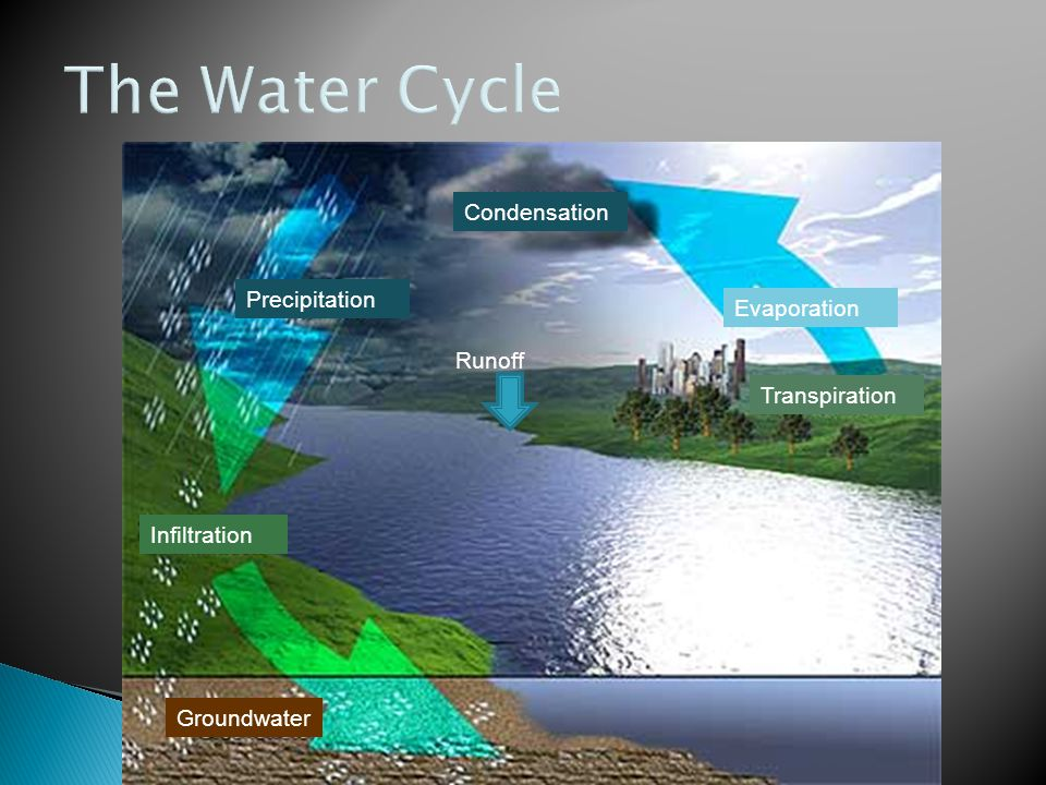 The Water Cycle Condensation Precipitation Evaporation Runoff
