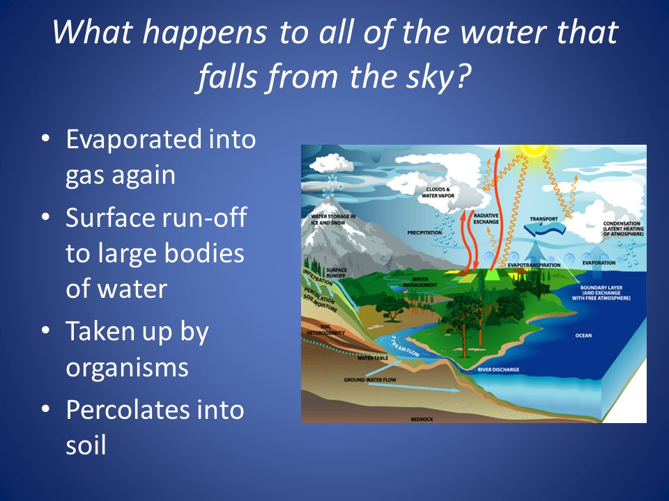 What happens to all of the water that falls from the sky