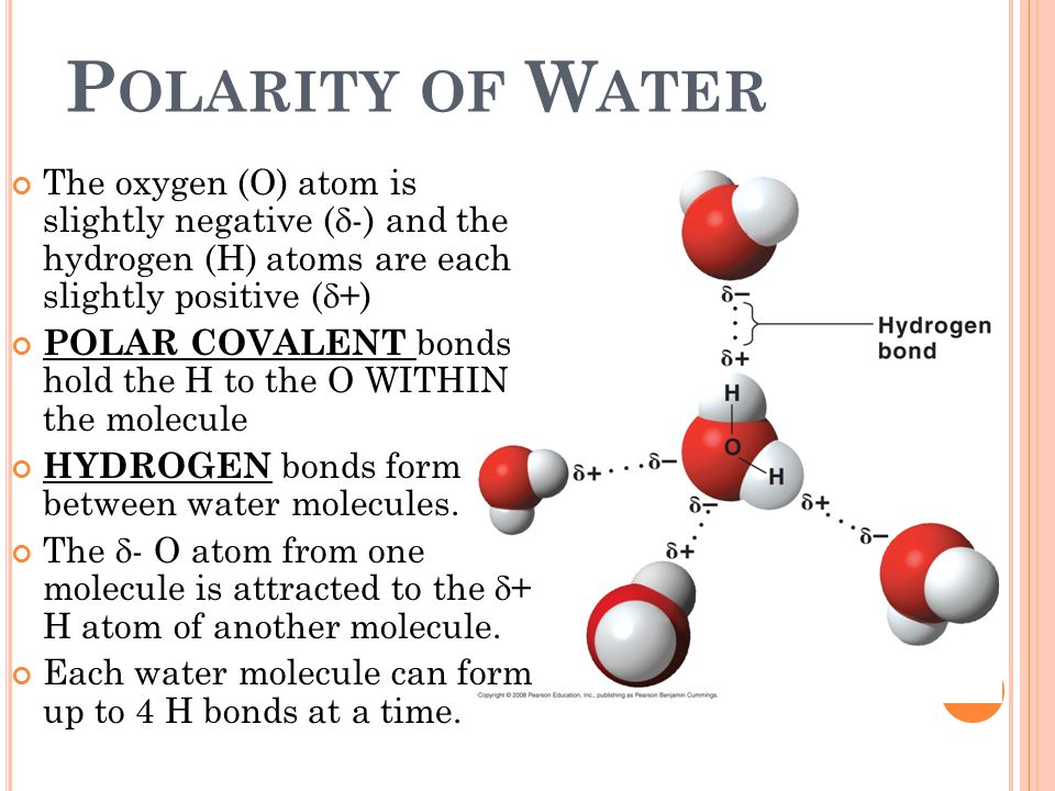 Polarity of Water The oxygen (O) atom is slightly negative (d-) and the hydrogen (H) atoms are each slightly positive (d+)