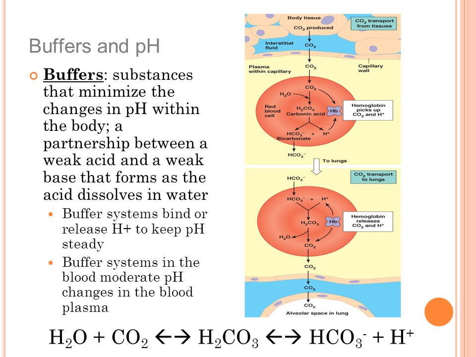 Buffers and pH H2O + CO2  H2CO3  HCO3- + H+