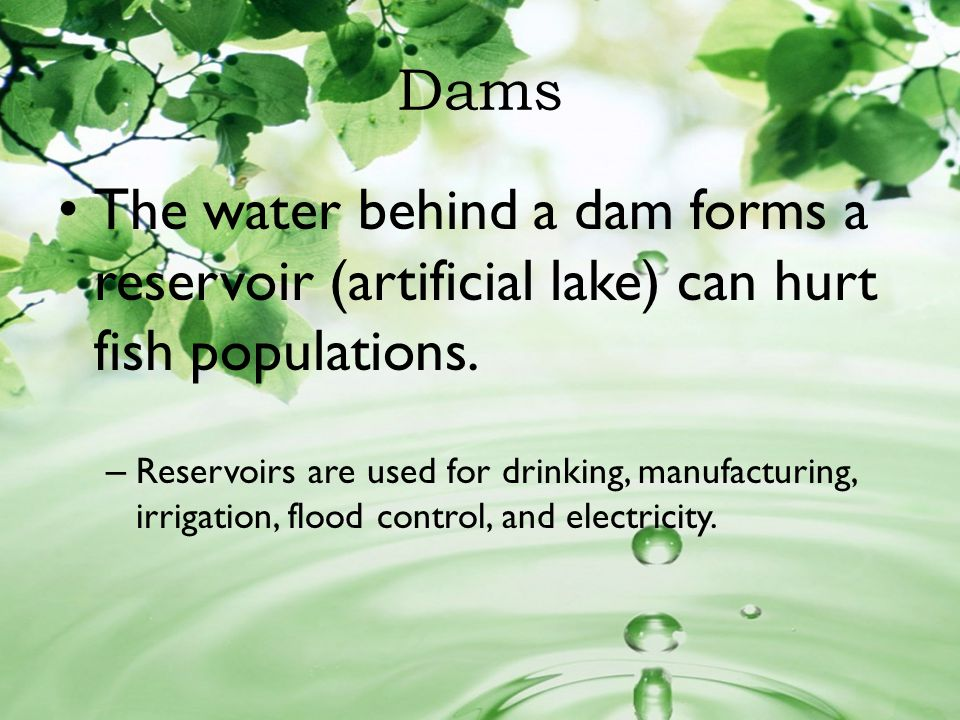 Dams The water behind a dam forms a reservoir (artificial lake) can hurt fish populations.