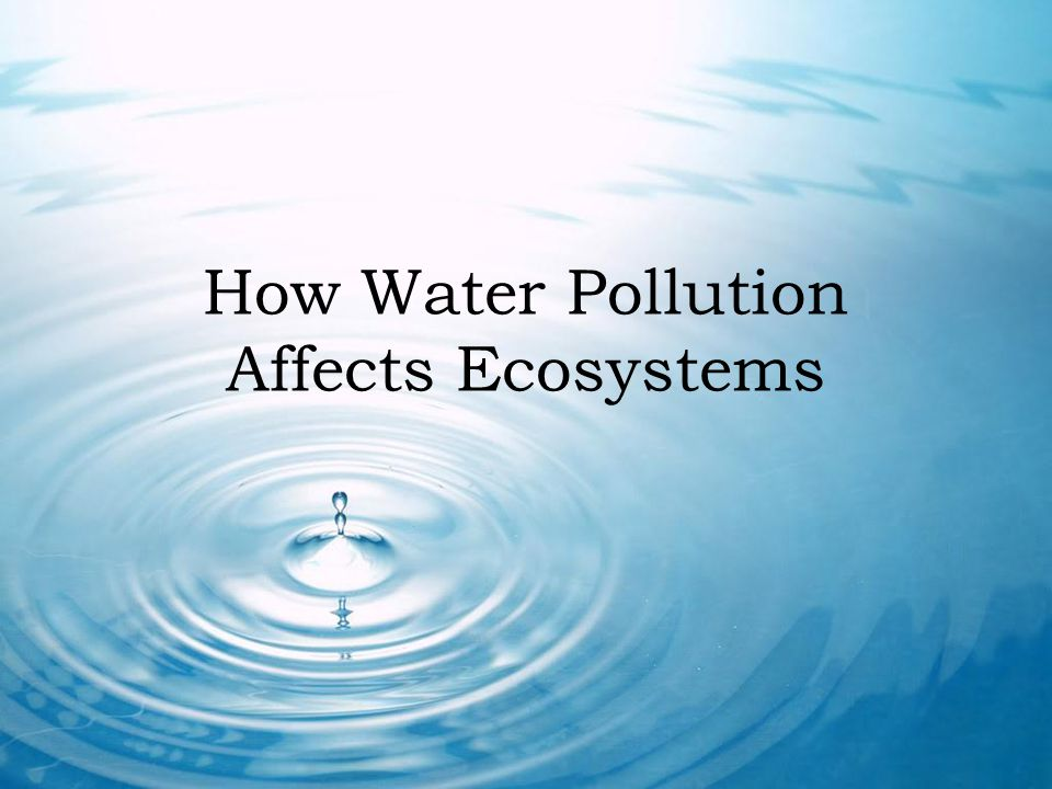 How Water Pollution Affects Ecosystems