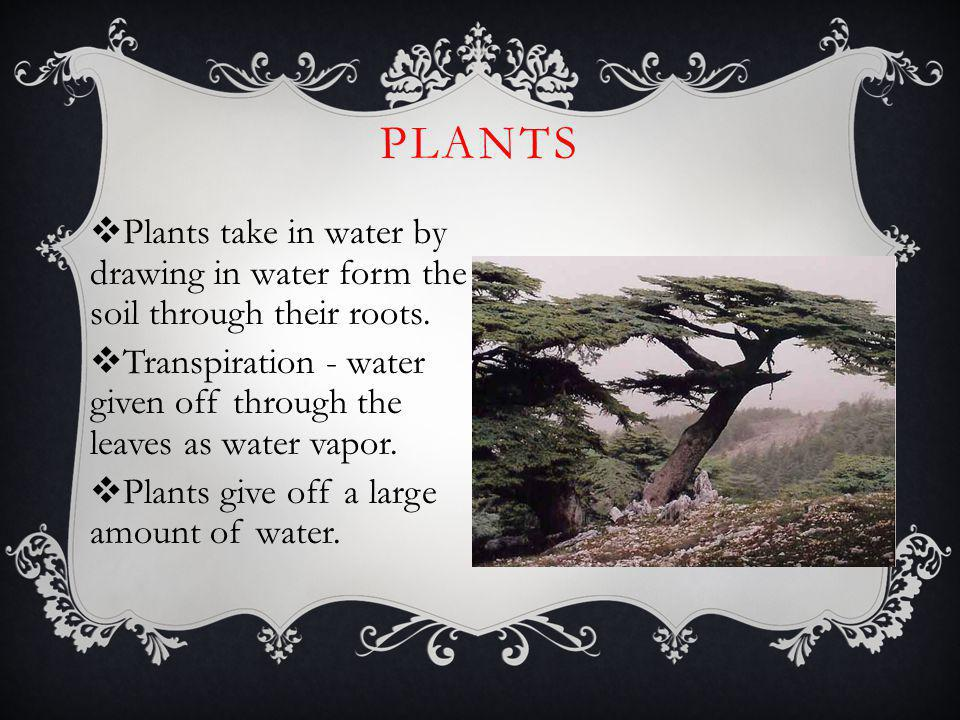 Plants Plants take in water by drawing in water form the soil through their roots.