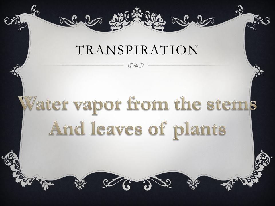 Water vapor from the stems