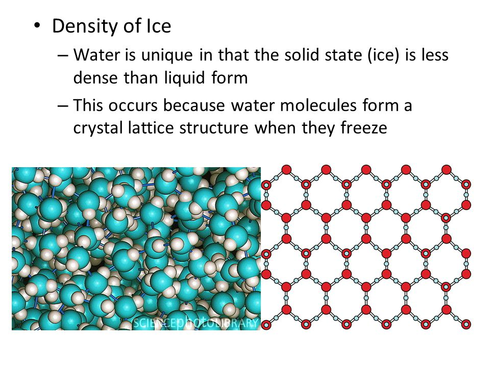 Density of Ice Water is unique in that the solid state (ice) is less dense than liquid form.