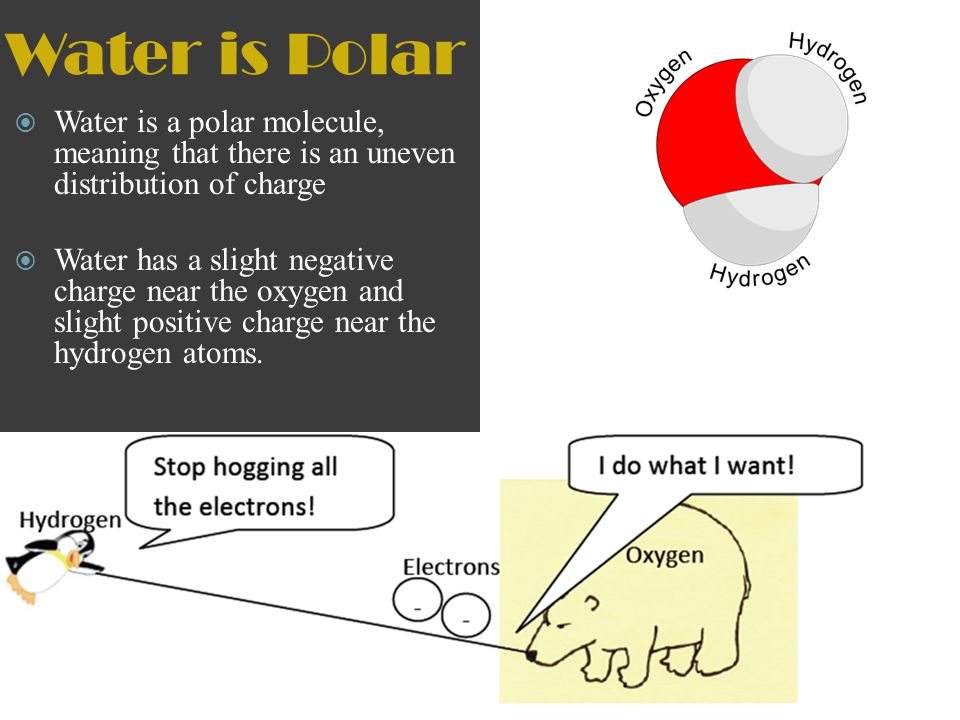 Water is Polar Water is a polar molecule, meaning that there is an uneven distribution of charge.