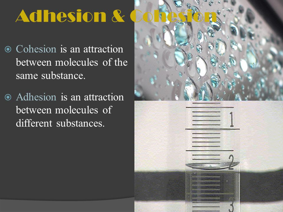 Adhesion & Cohesion Cohesion is an attraction between molecules of the same substance.