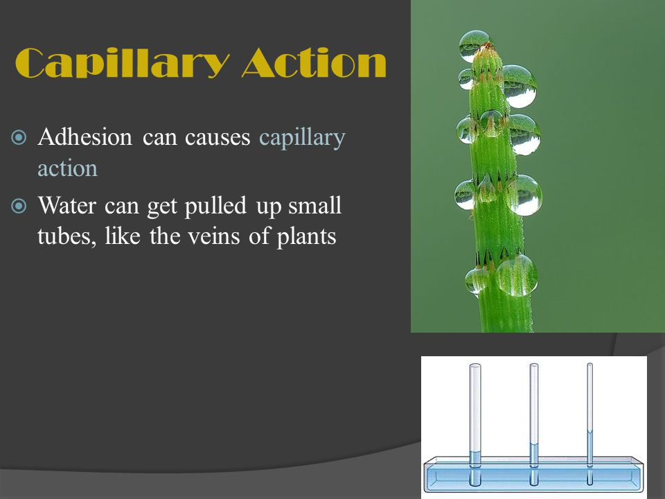 Capillary Action Adhesion can causes capillary action
