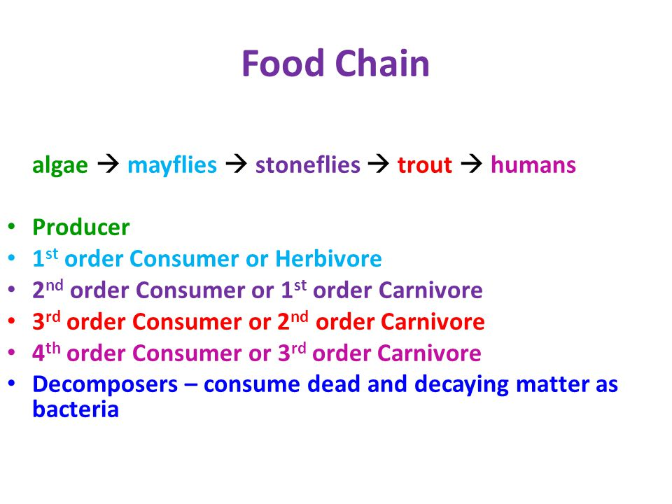 Food Chain algae  mayflies  stoneflies  trout  humans Producer