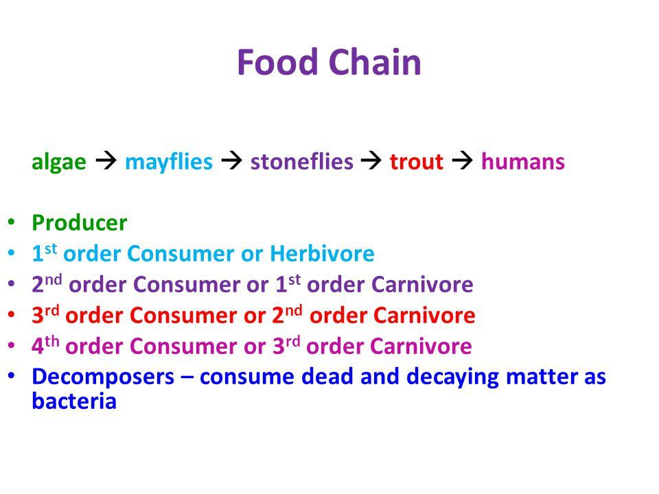 Food Chain algae  mayflies  stoneflies  trout  humans Producer