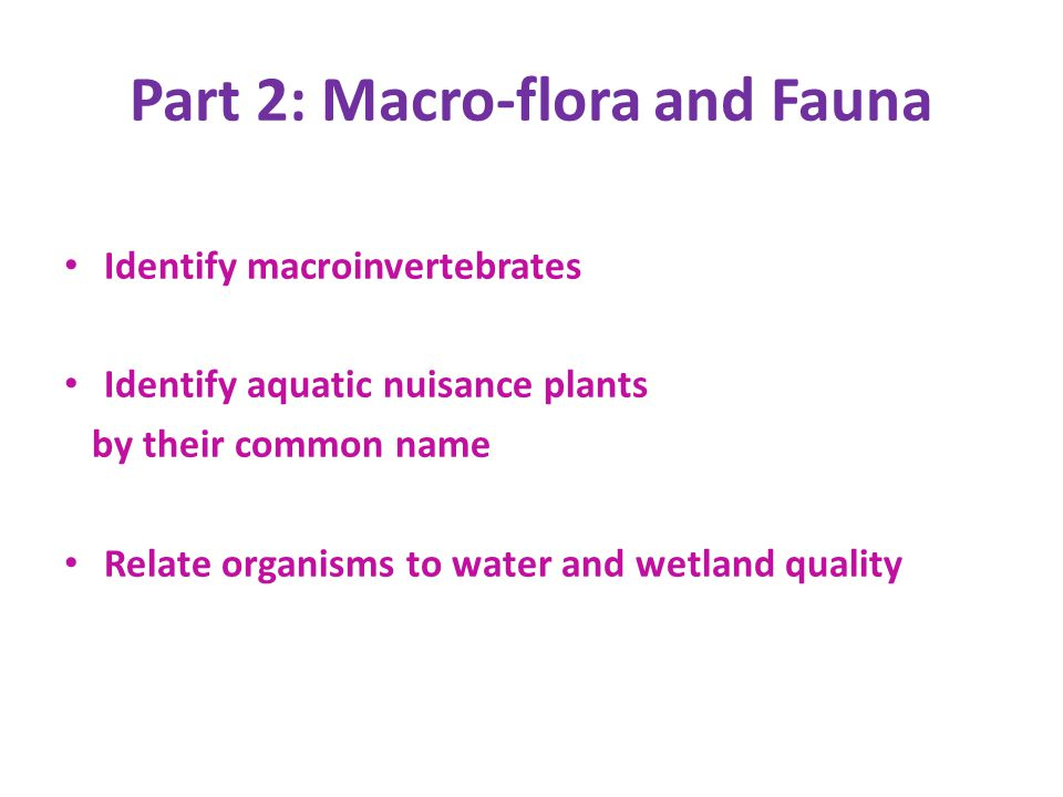 Part 2: Macro-flora and Fauna