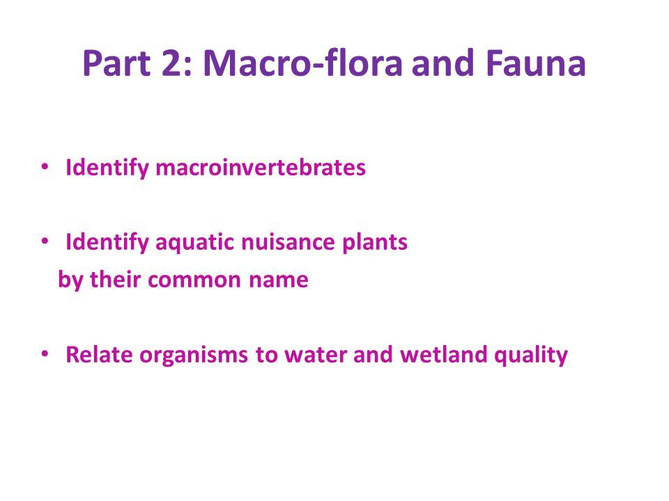 Part 2: Macro-flora and Fauna