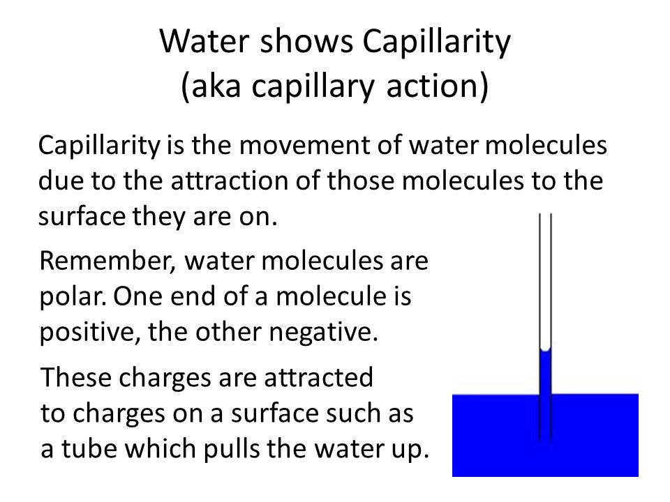 Water shows Capillarity (aka capillary action)