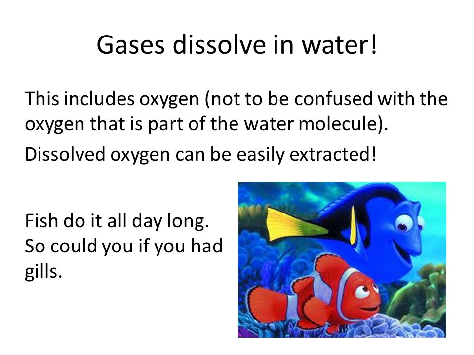 Gases dissolve in water!