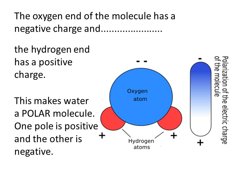 The oxygen end of the molecule has a negative charge and