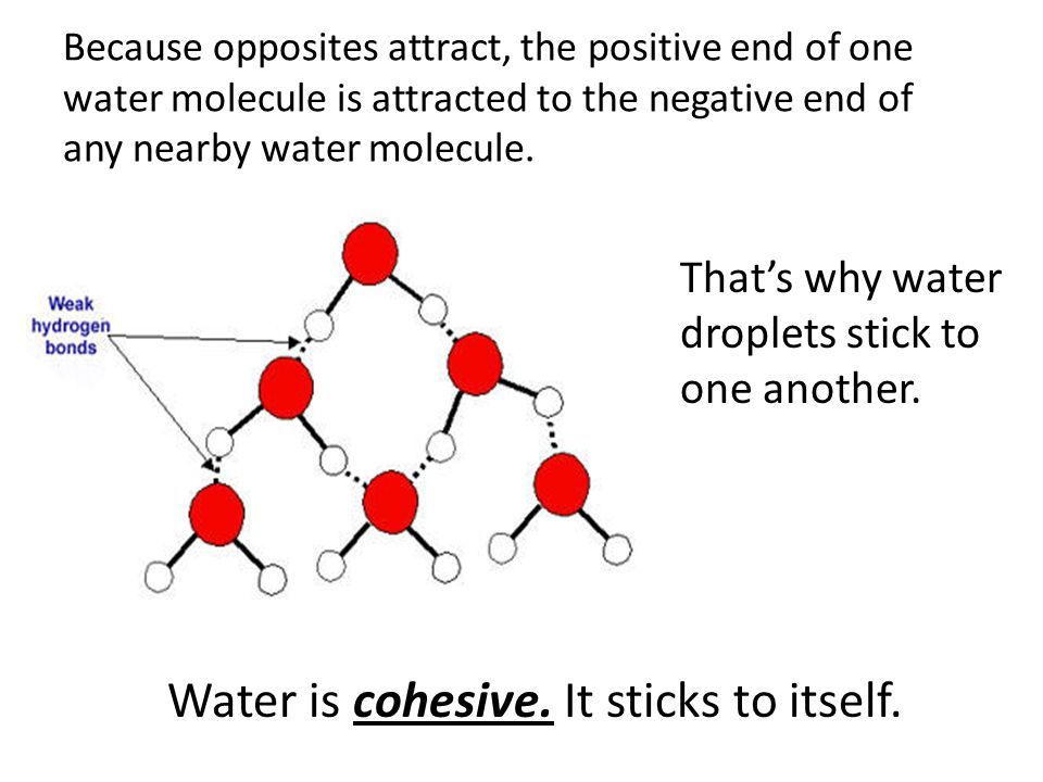 Water is cohesive. It sticks to itself.