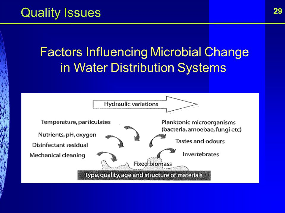 Factors Influencing Microbial Change in Water Distribution Systems