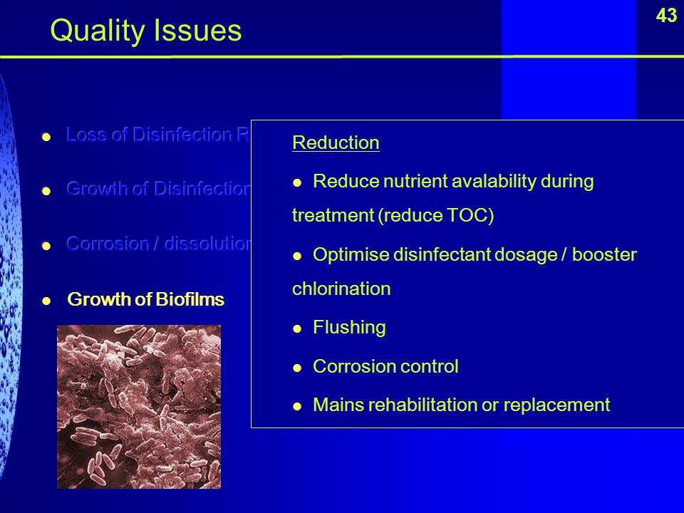 Quality Issues 43 Loss of Disinfection Residual