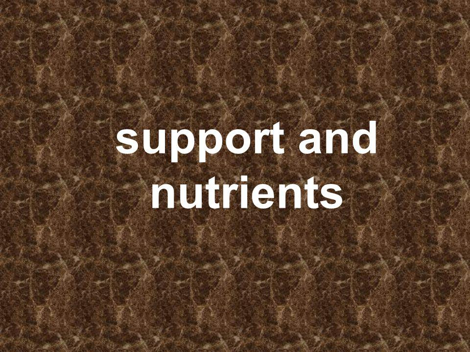 support and nutrients