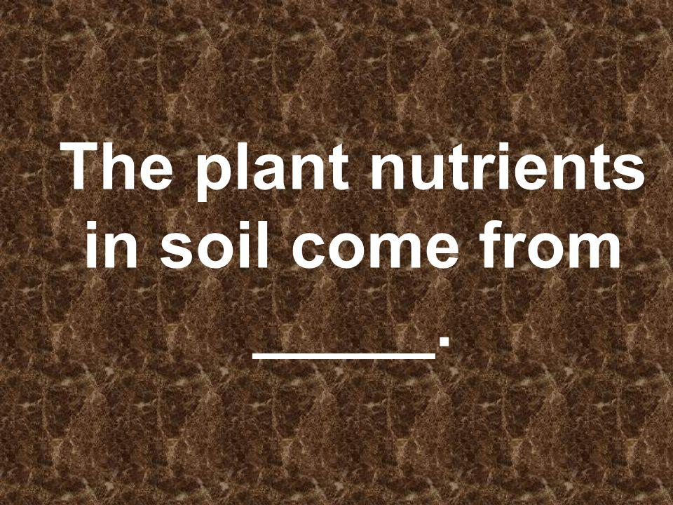 The plant nutrients in soil come from _____.