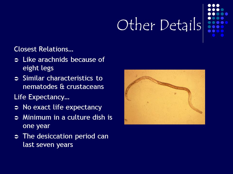 Other Details Closest Relations… Like arachnids because of eight legs