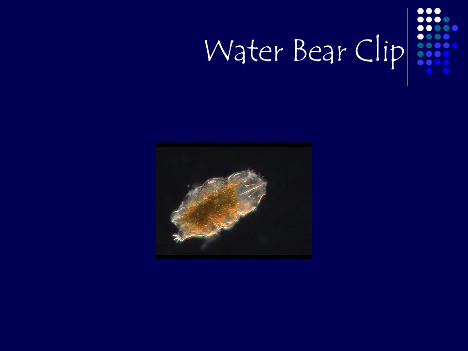 Water Bear Clip