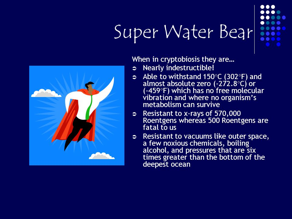 Super Water Bear When in cryptobiosis they are… Nearly indestructible!