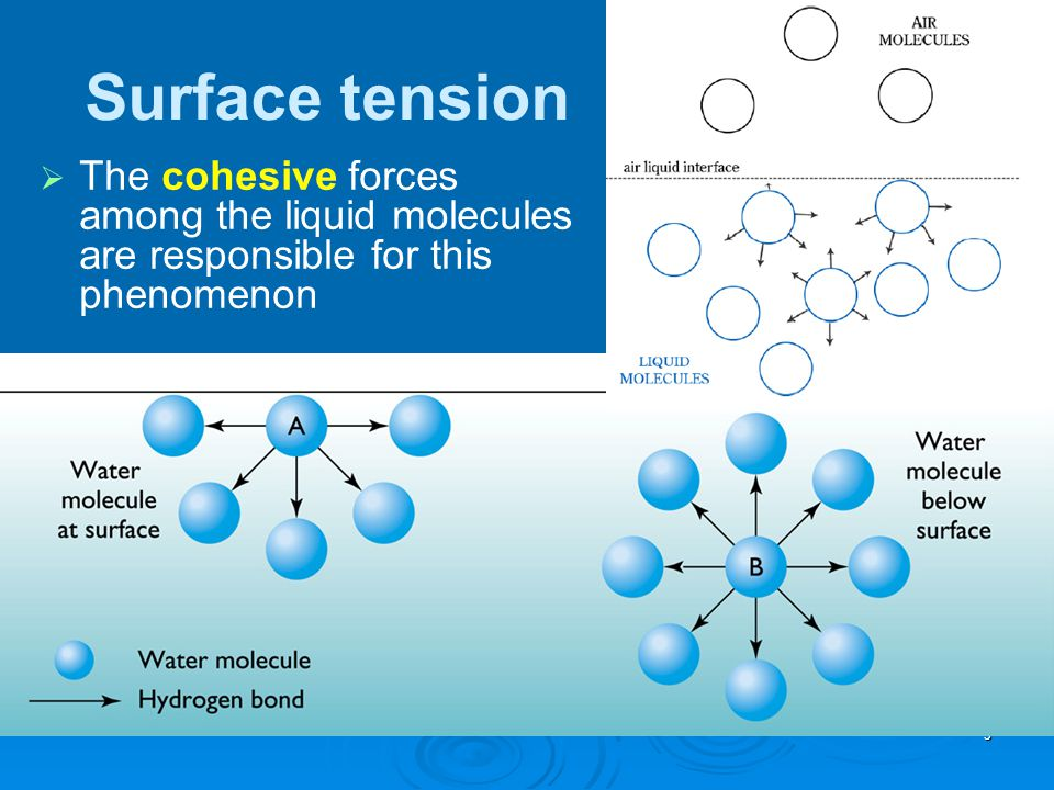 Surface tension The cohesive forces among the liquid molecules are responsible for this phenomenon
